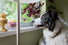 doggie dog